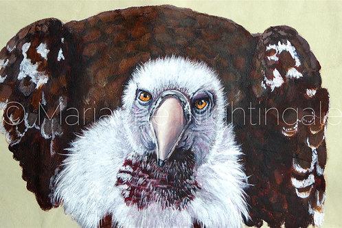 Vulture Head Study