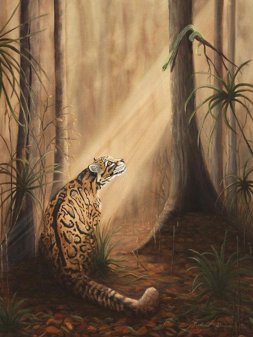 Temptation - Clouded Leopard