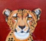 Cheetahface.jpg