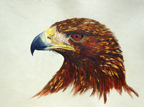 Golden Eagle Head Study