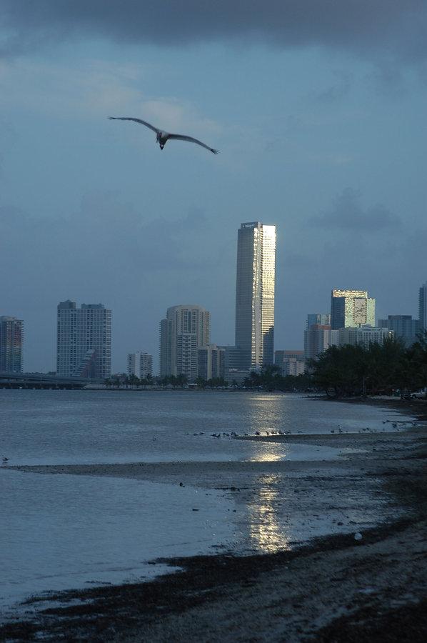 DSC_0012 miami sunrise with bird.JPG