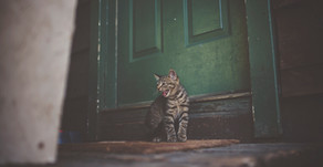 Why the First Animals on Your Homestead Should Be Barn Cats
