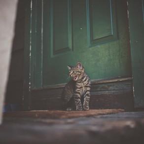 Si vous avez perdu votre chat