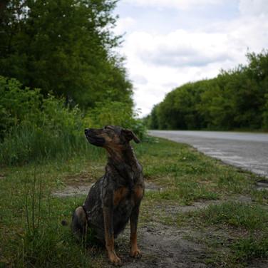 Dogs of Chernobyl