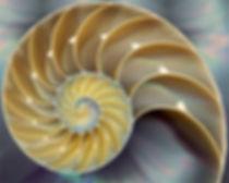 nautilus-sea-shell.jpg