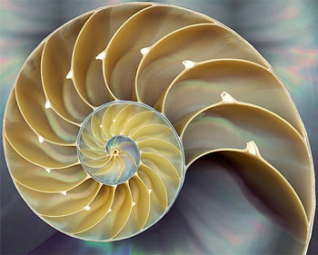nautilus-sea-shell.jpg