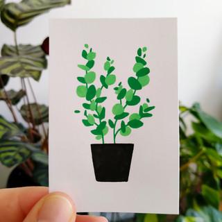22-24 Ecucalyptus.jpg