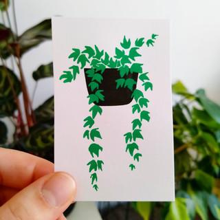 28-30 English Ivy.jpg