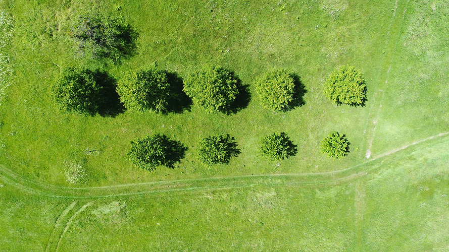 Field from Above