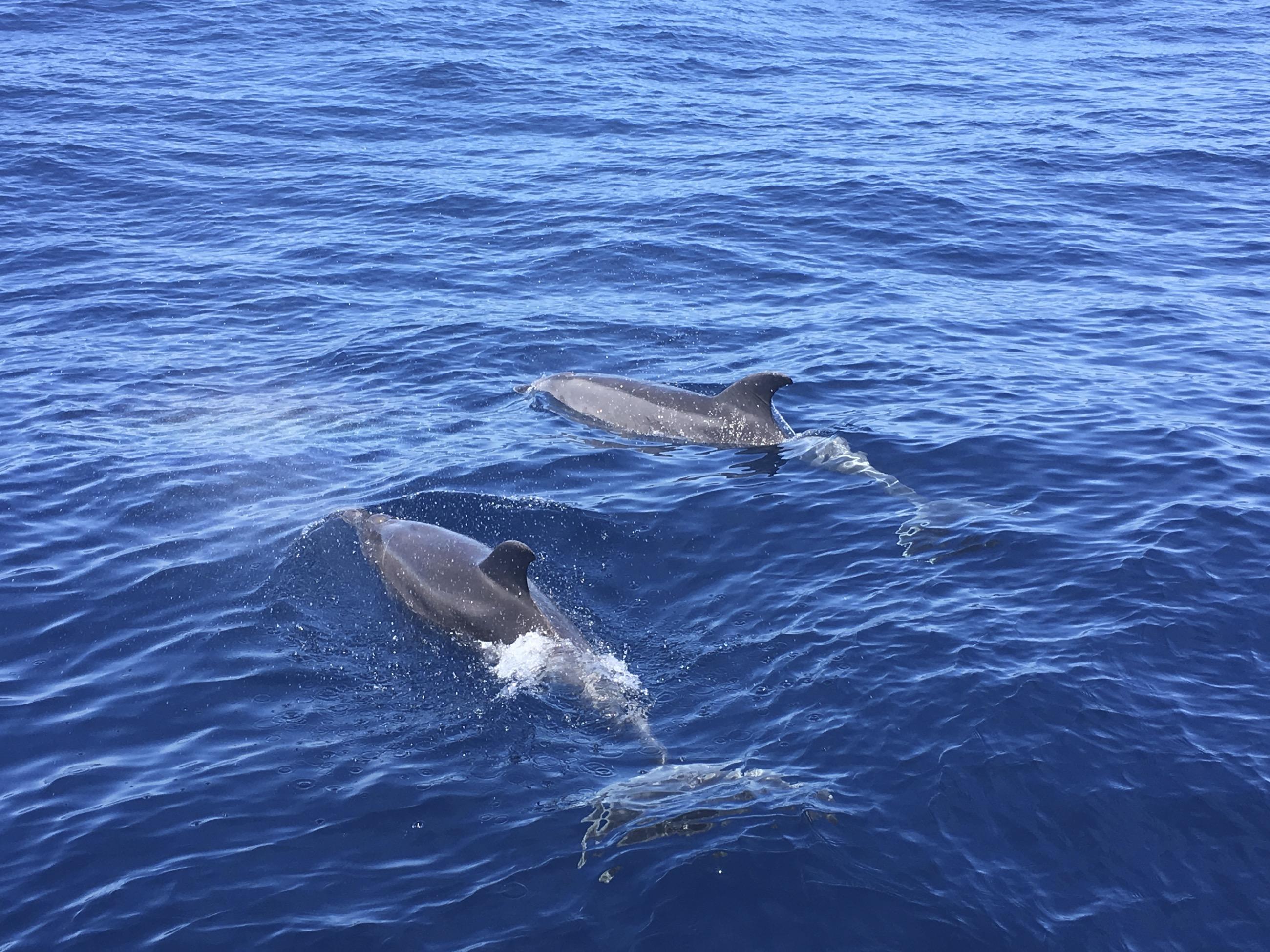 Excursión en velero delfin