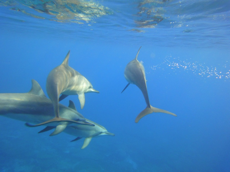 dolfin-cuba-sailing