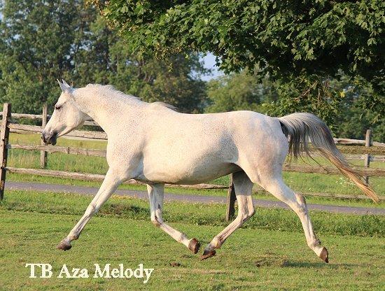 TB Aza Melody