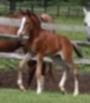 bay colt 4735.jpg