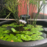 Our relaxing garden lily pond fountain.