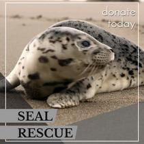 Animal rescue template
