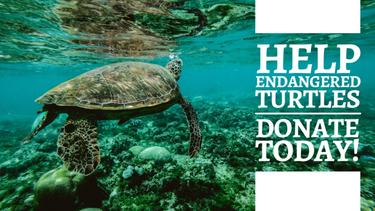 Help endandered animals template