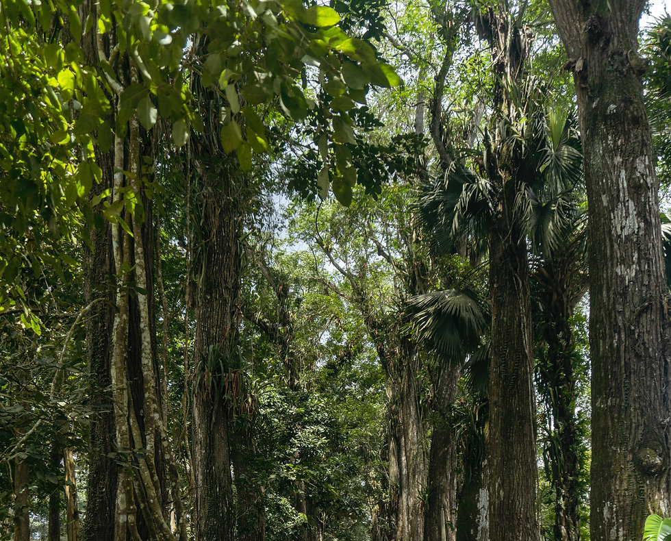 Ghana Forest Credit-Seyiram Kweku.jpg