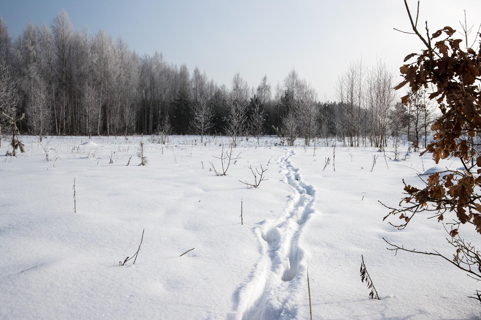 Bialowieza 2017-69