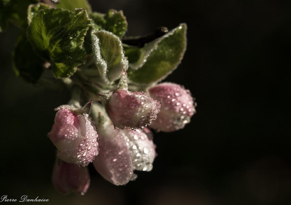 fleurs_pm-3.jpg