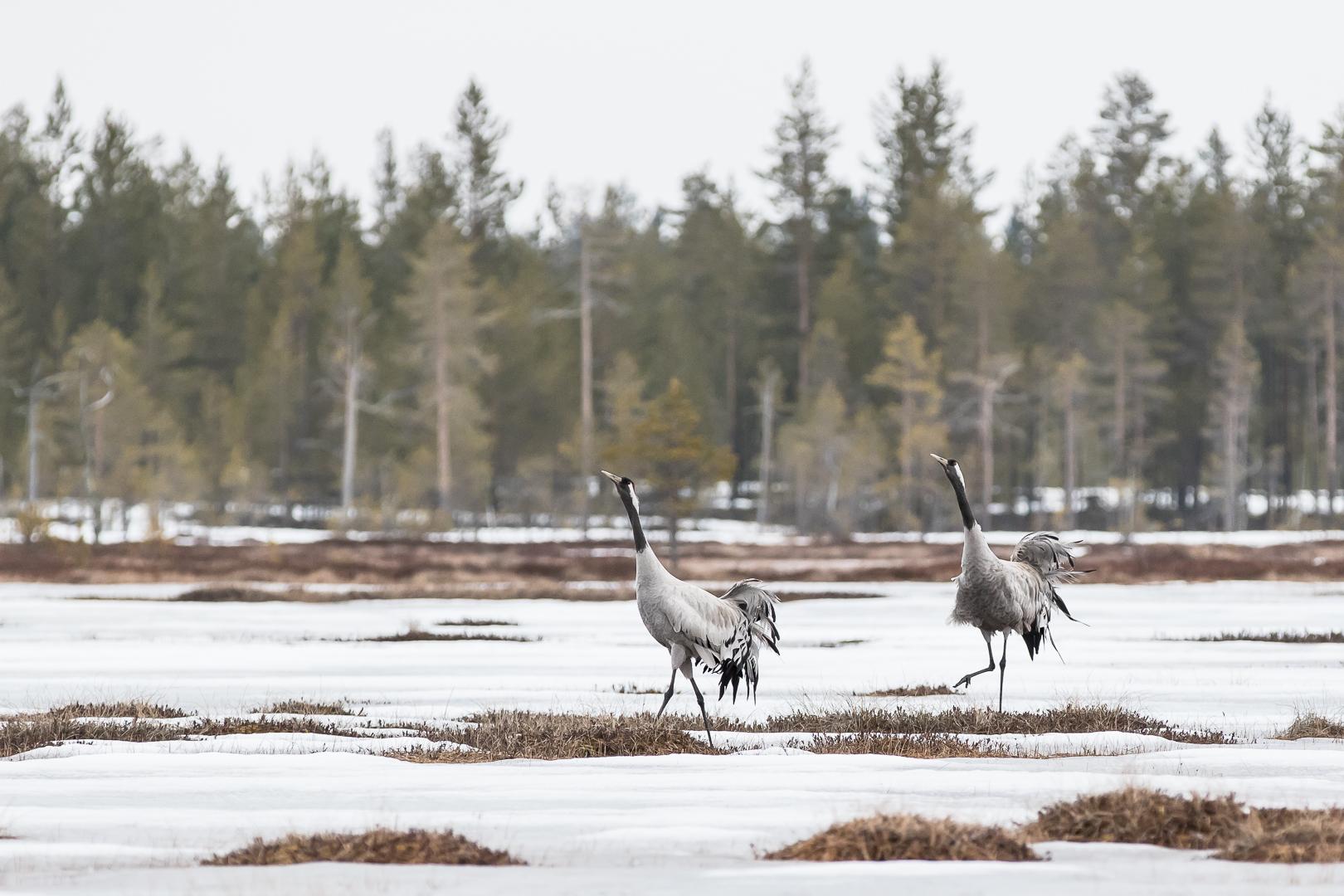 Finlande 2015-8