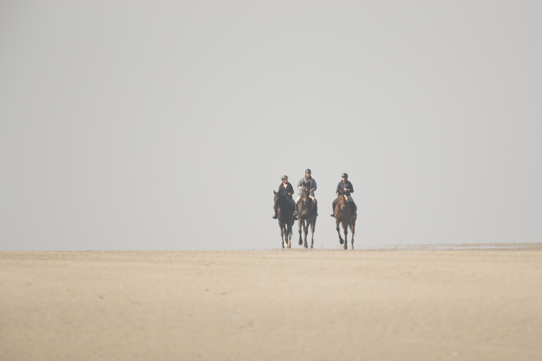 cavaliers sur l'estran