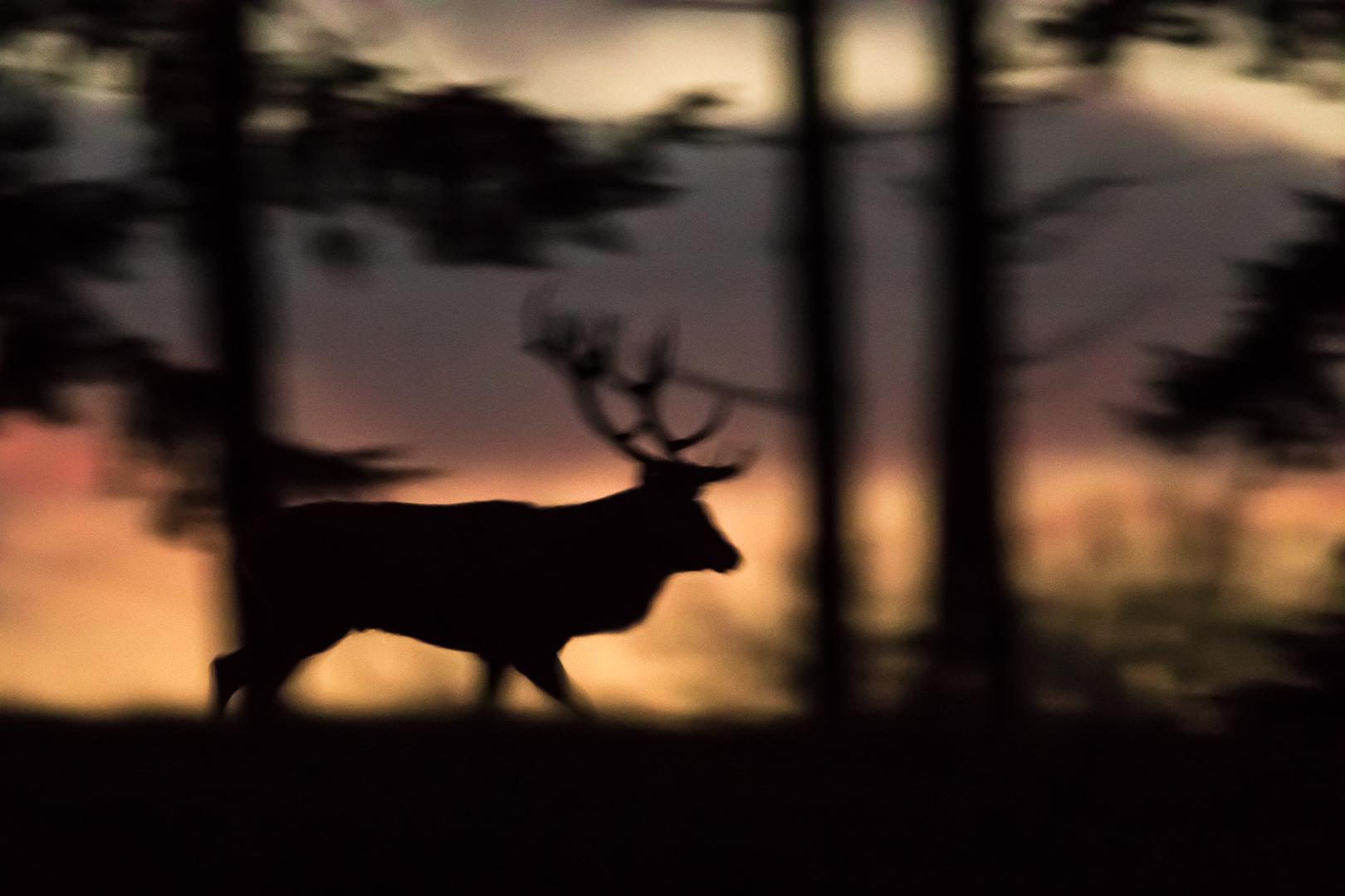 silhouette du soir