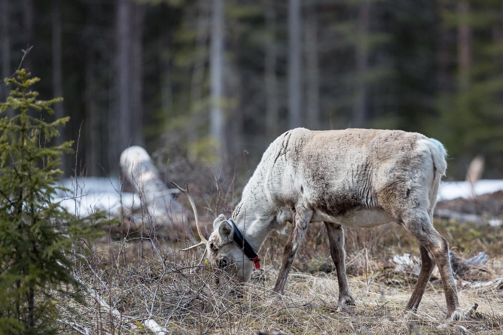 Finlande 2014-110