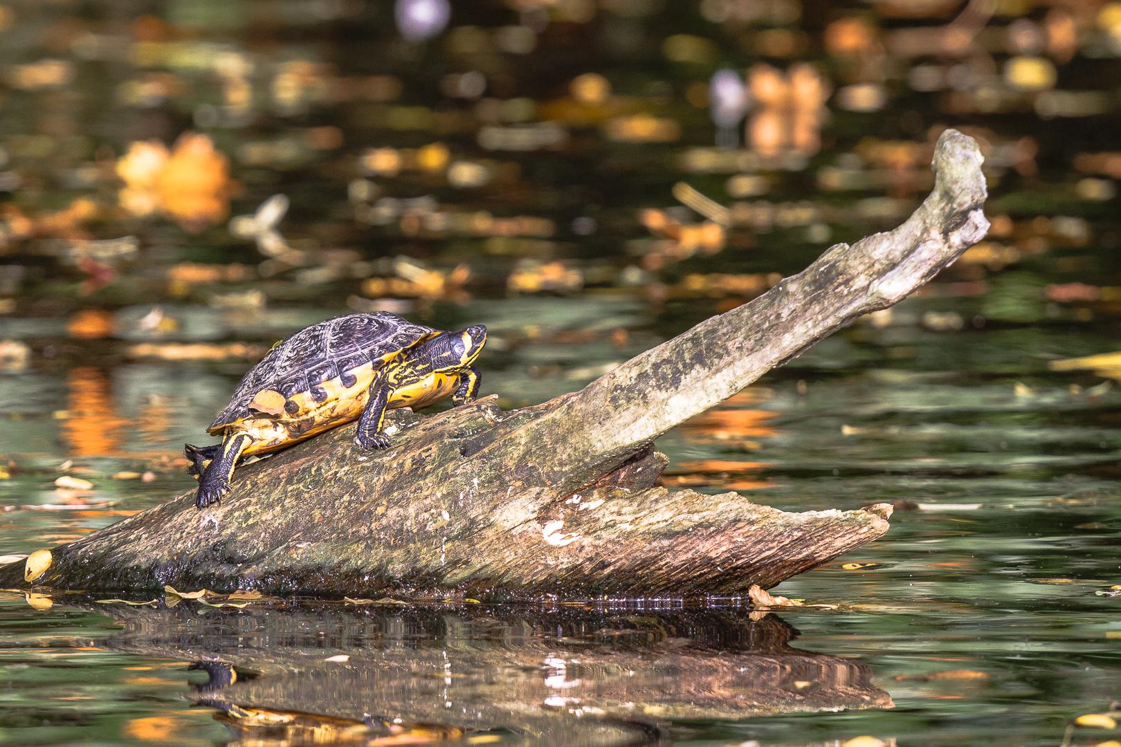 Batraciens et reptiles_2