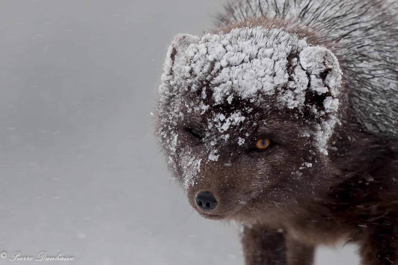 Islande_février_2019-8