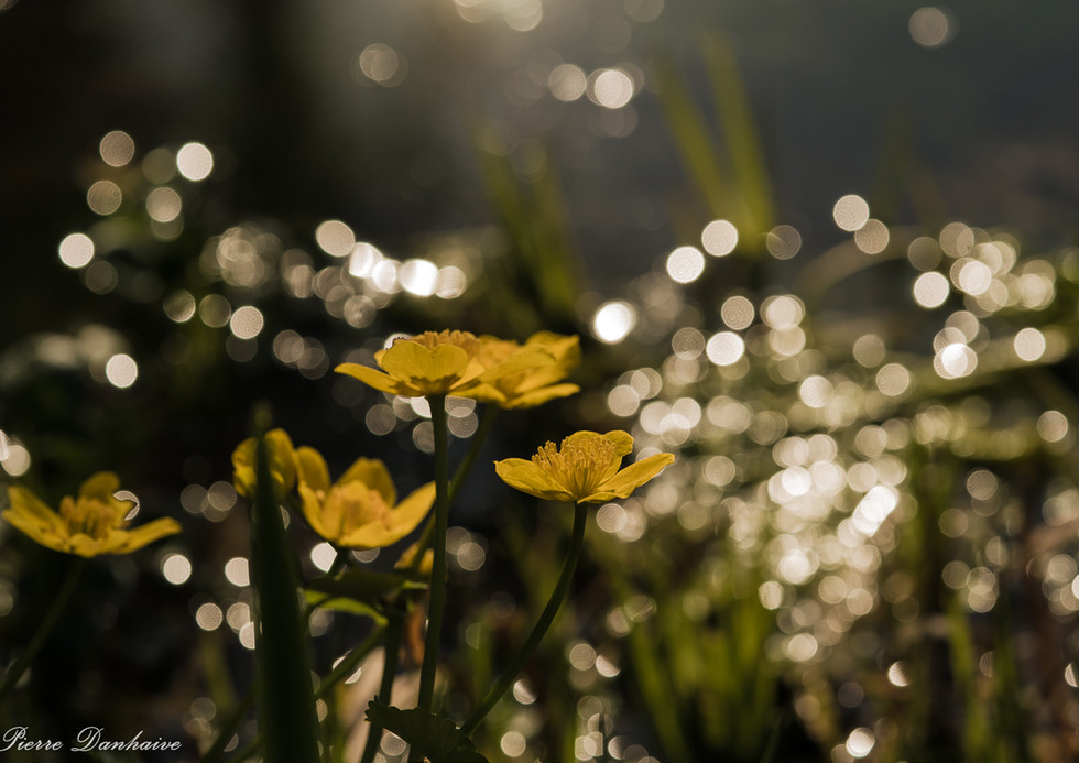 soleil et eau-8.jpg