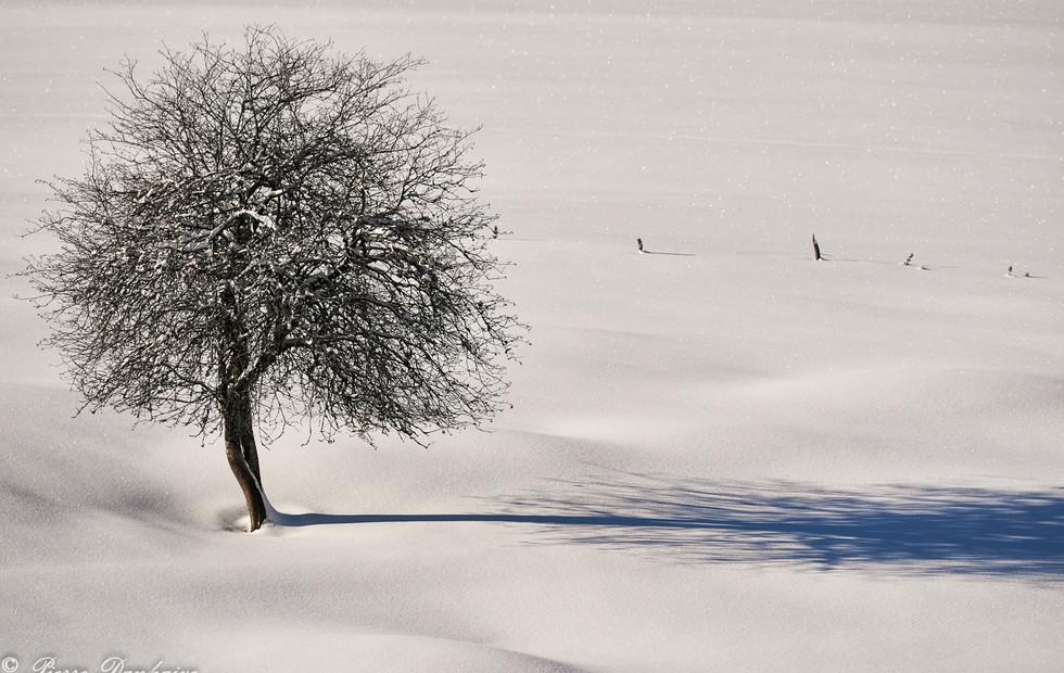Haut-Bugey janvier 2021_2_-38.jpg