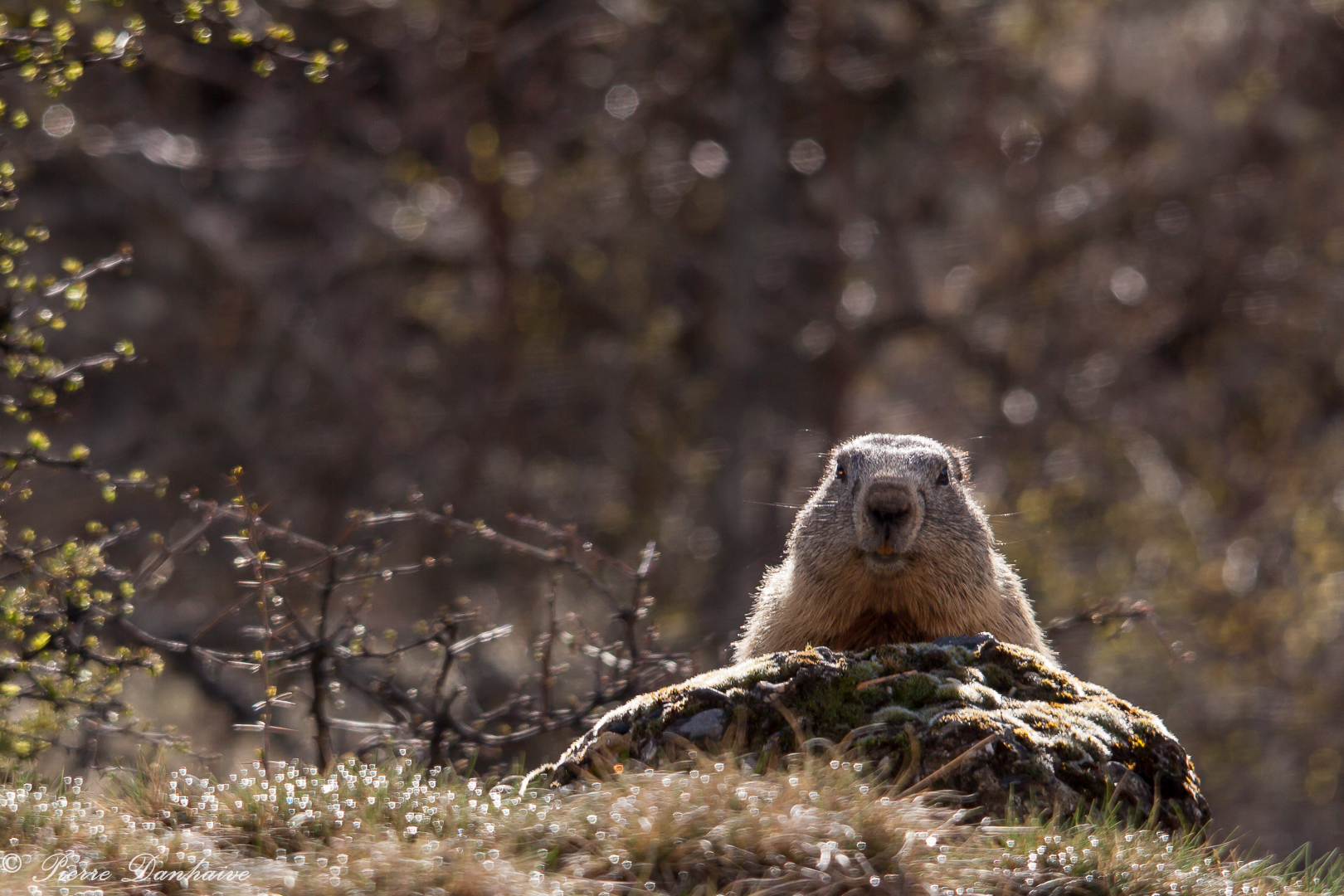 marmottes_2-2