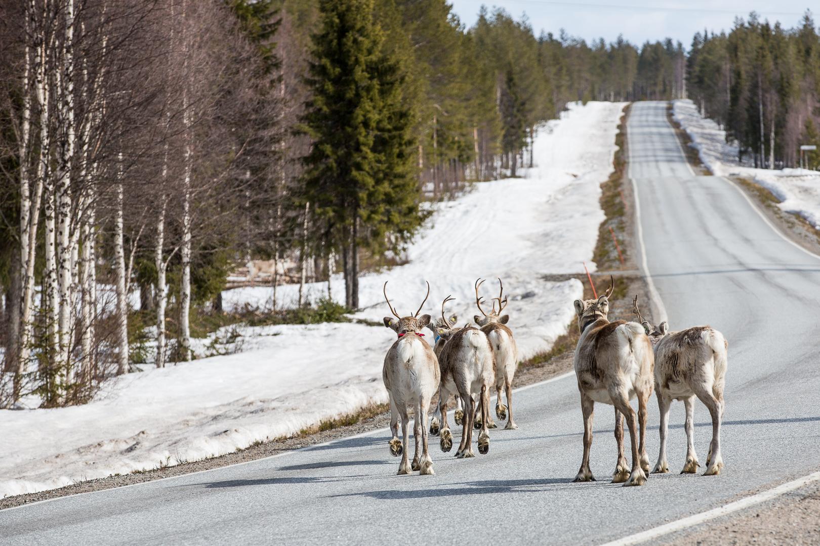 Finlande 2015-149