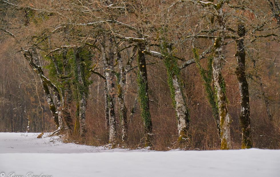 Haut-Bugey janvier 2021_2_-50.jpg