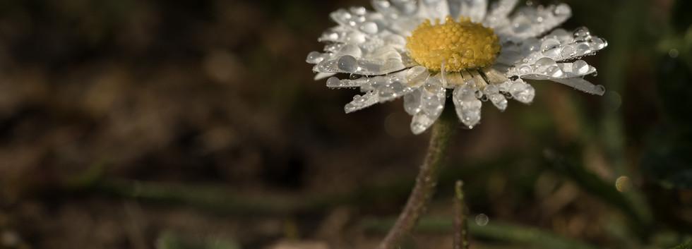 fleurs_pm-5.jpg