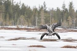 Finlande 2015-10