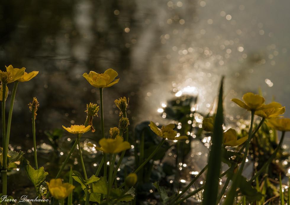 soleil et eau-3.jpg