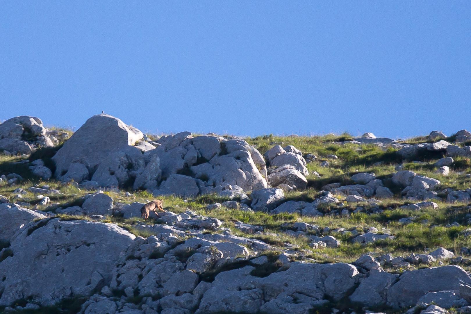 Abruzzes juin 2016-10