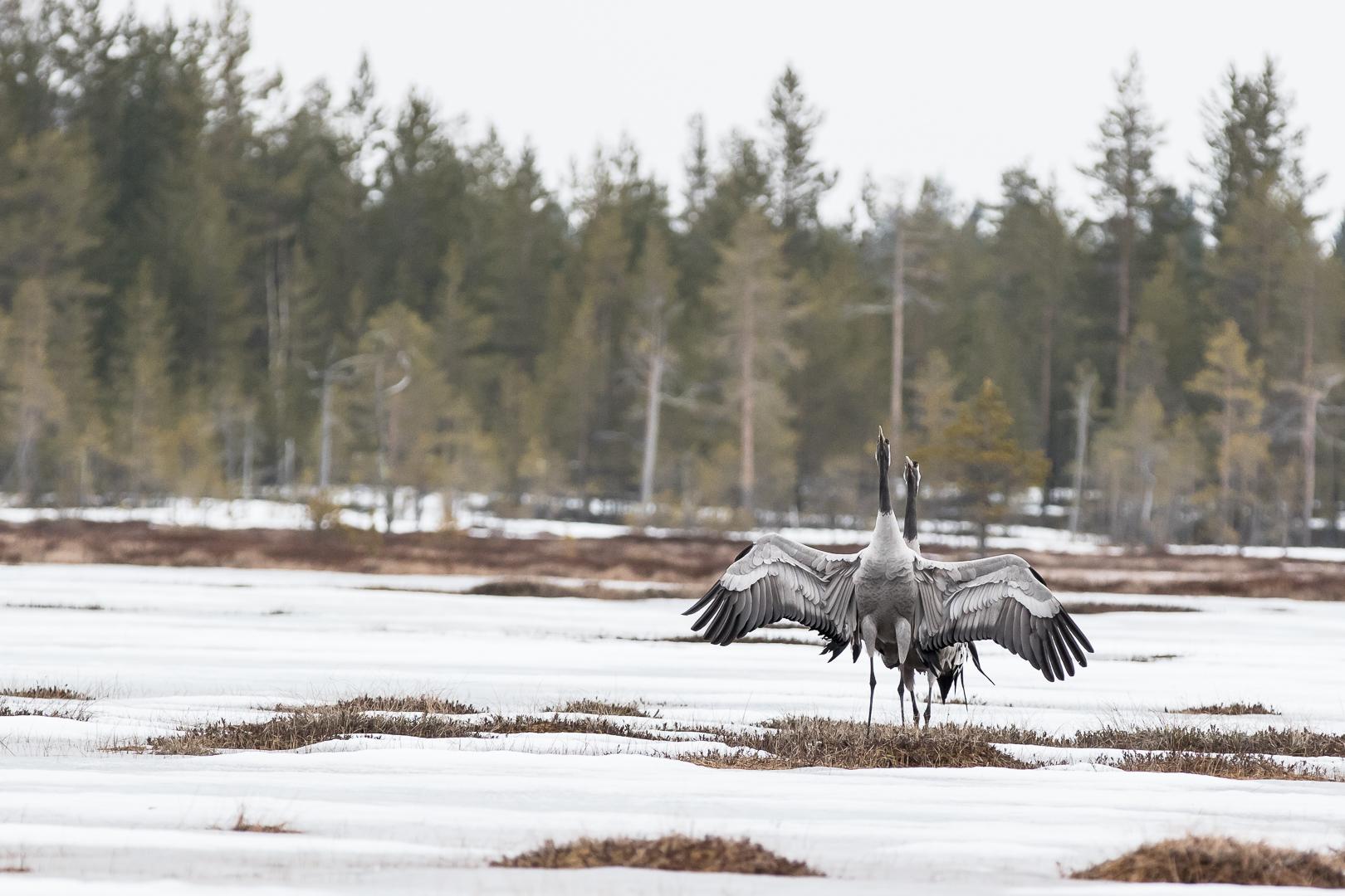 Finlande 2015-9
