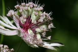 Fleurs-6