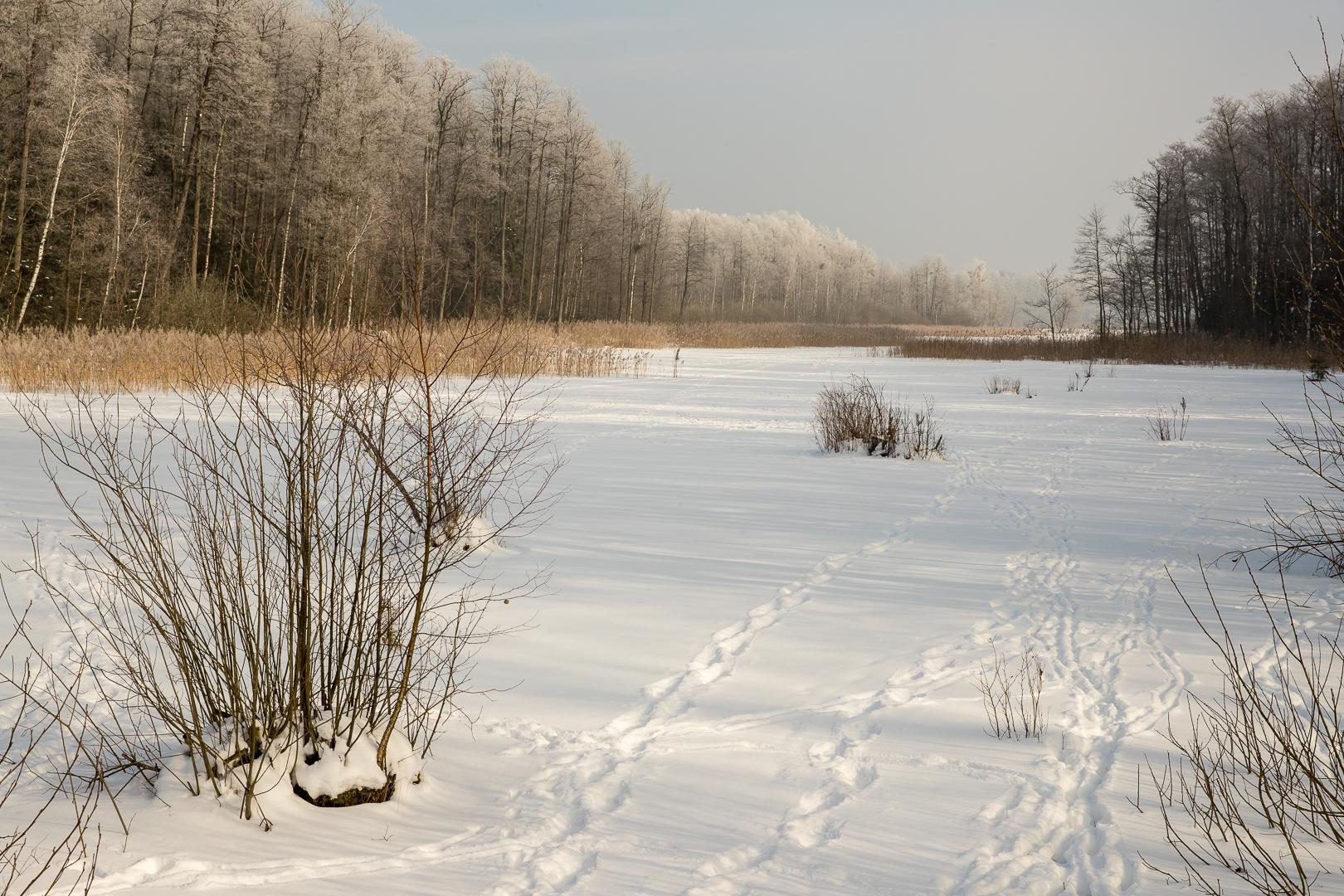 Bialowieza 2017-75