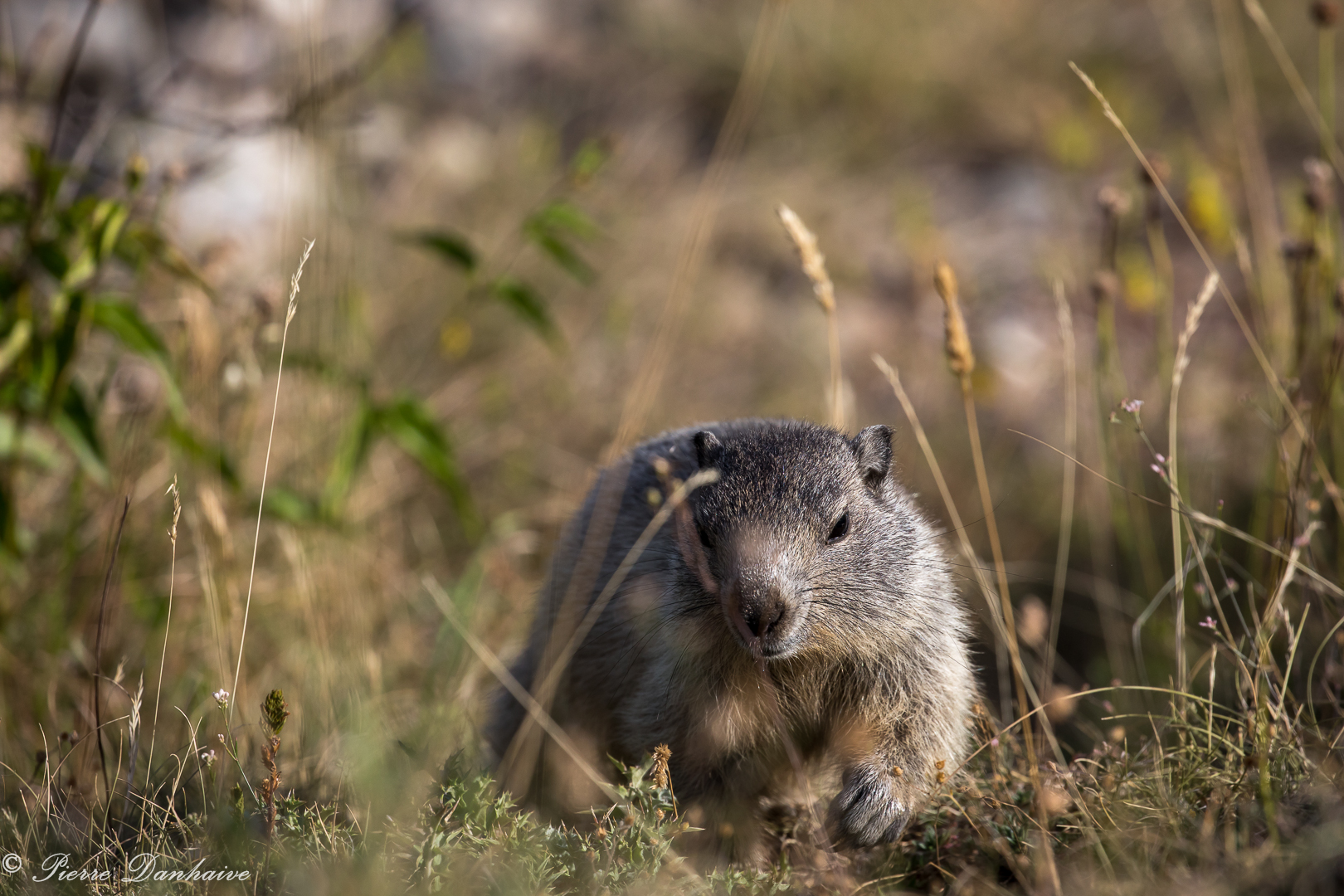 marmottes-9