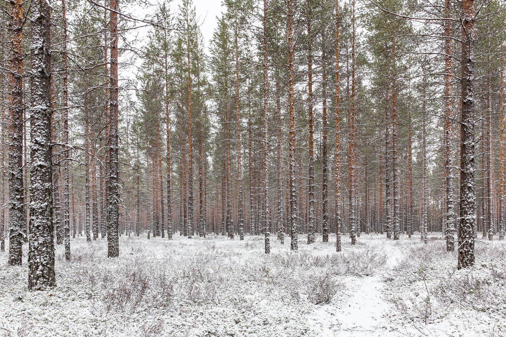 Finlande 2015-152