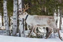 Finlande 2015-148