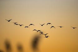 Oiseaux-219