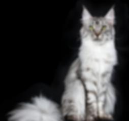 NICOLE MILLER CAT.png