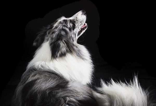 NICOLE MILLER DOG.png