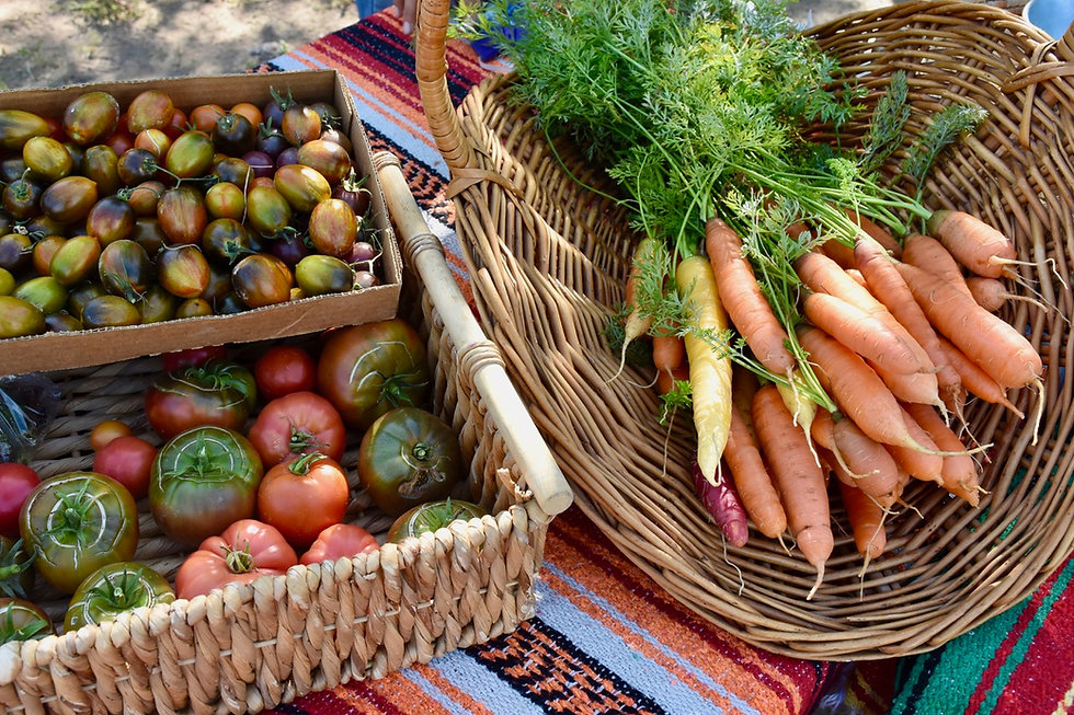 Luciente Abiquiu Farmers Market