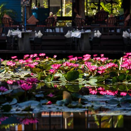 The Spiritual Gardens of Laos
