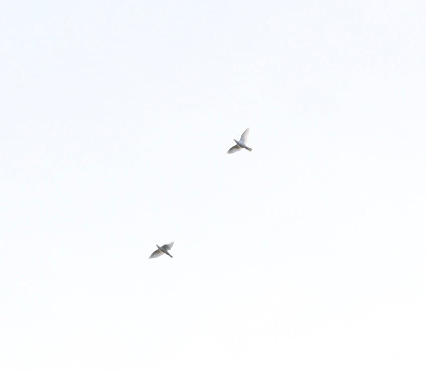 Doves released in honor of Nikhil and Mackenzie